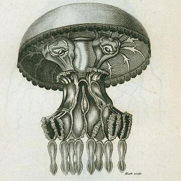 Jellyfish by Geekimpact