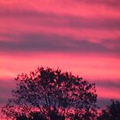 Pink Sunset by brendalynn52