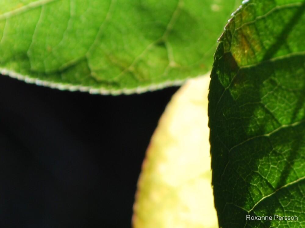 Leaf Trinity by Roxanne Persson