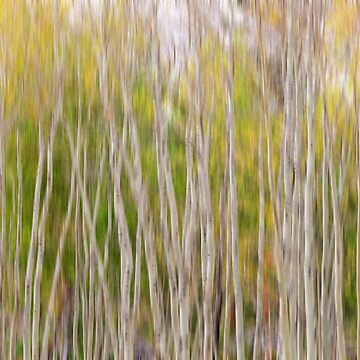 Forest Twist and Turns In Motion by mrbo