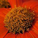 a bit of orange by Stefan Trenker