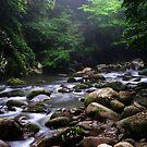 Tennessee Stream II by Scarlett