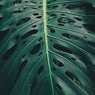Hawaii Monstera Deliciosa Plant Leaf by TheWaywardVixen