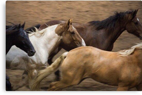 Wild Horses by Scott Ruhs