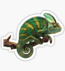 Lizard The Veiled Chameleon Sticker