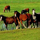 Horses are looking at you by jchanders