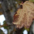 Autumn Decay I by myREVolution