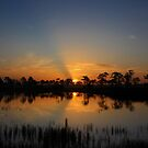 Morning glory by kathy s gillentine