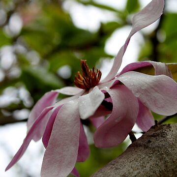 Magnificent Magnolia by Evita