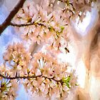 Blossoms of The Mount - Mount Wilson NSW Australia by Philip Johnson