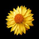 Sunshine by Dmarie Becker
