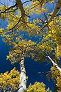 Looking Up for Fall by photosbyflood