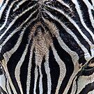 Zebra by Ladyshark