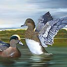 Greeting The Morning - American Wigeon by John Houle