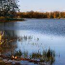 Fall in lake by Antanas