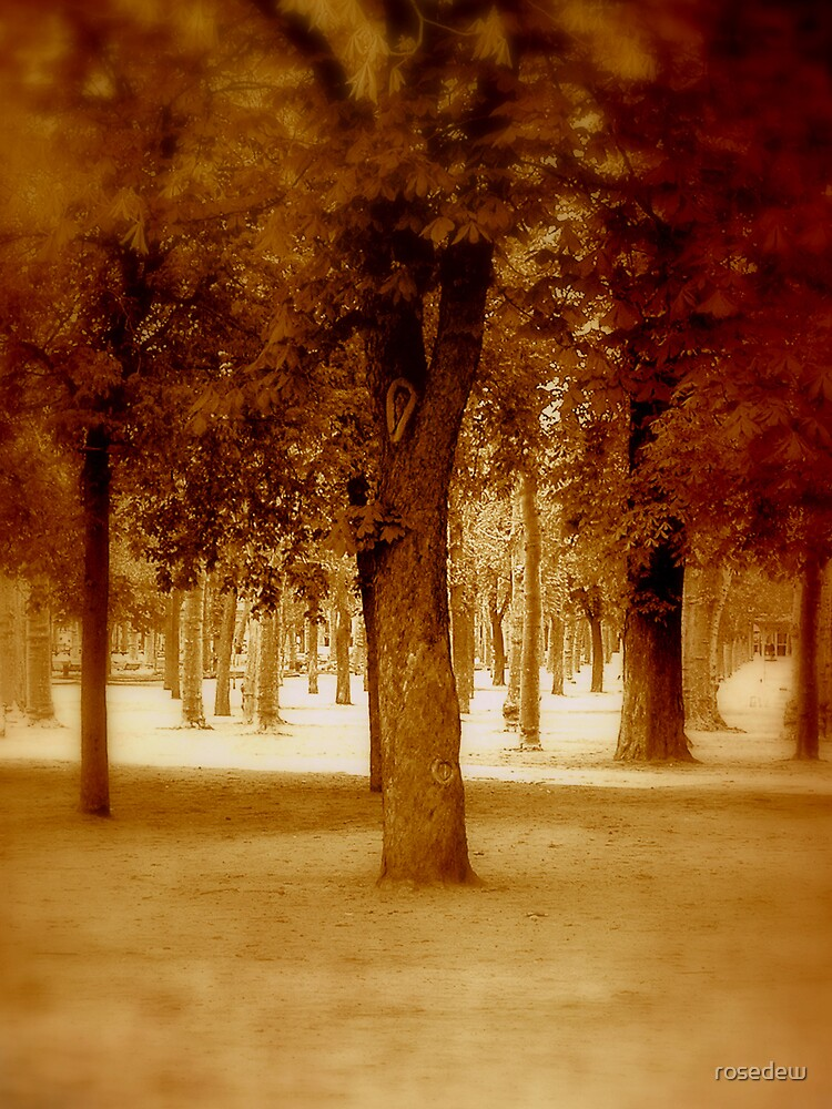 Trees in Sepia by ROSE DEWHURST