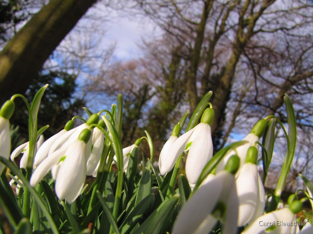 Worm's Eye View of Spring by Carol Bleasdale