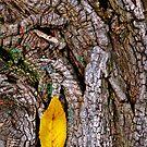 Yellow by Nancy Barrett