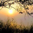 Misty Sunrise by Jo Nijenhuis