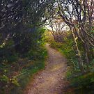 Path to Summer by Tibby Steedly