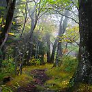 Path to Faerie Woods by Tibby Steedly