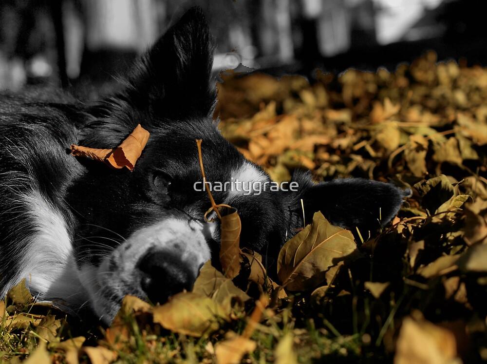 I love autumn by charitygrace