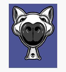 English Bull Terrier Hello Photographic Print