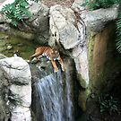 The Tiger and the Waterfall by Terence Russell