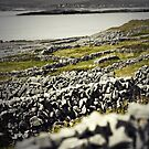 Aran walls, Inishmore, Ireland by Monica Di Carlo