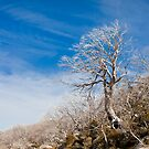Perisher back country - 5 by pmacimagery