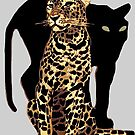 Spotted leopard and black panther by edsimoneit