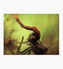 dragonfly world Photographic Print