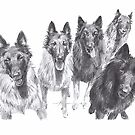 belgian shepherd family drawing by Mike Theuer