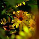 Wild Sunflower by Brad Chambers