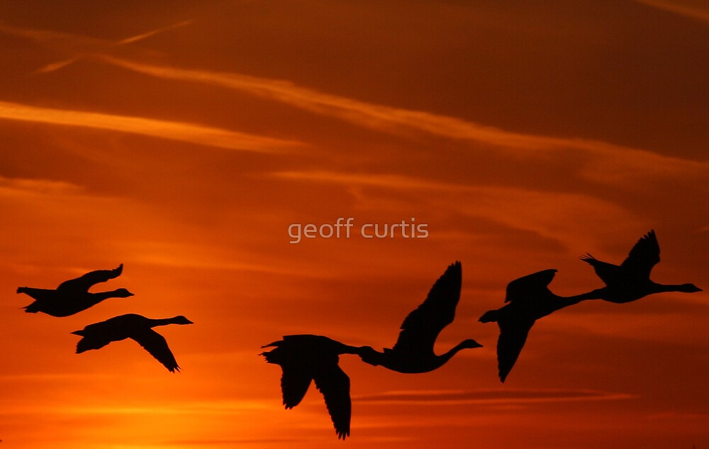 Flying South by geoff curtis