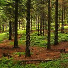 in the forest by danapace