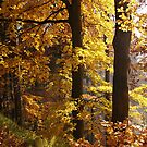 autumn by dagmar luhring