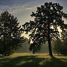 morning fog by danapace