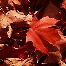 Bright Red Autumn Leaves  by MBWright88