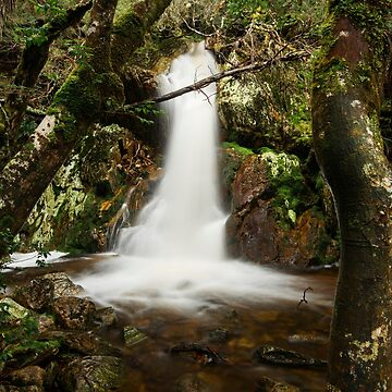 Crater Falls in Cradle Mountain by artistrobd