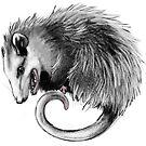 Virginia Opossum by FaunaFocus