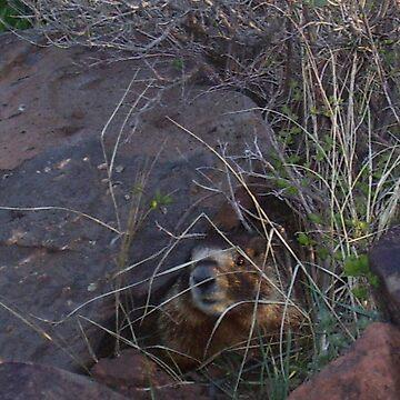 A good hiding spot by borgking001a