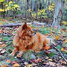 'Cindy Loves the Woods...' by Scott Bricker
