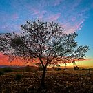 Outback Sunset (full image) by Ray Warren