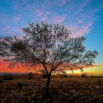 Outback Sunset (full image) by RayW
