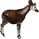 Okapi by FaunaFocus