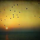 Flying at sunrise by Barbara  Corvino