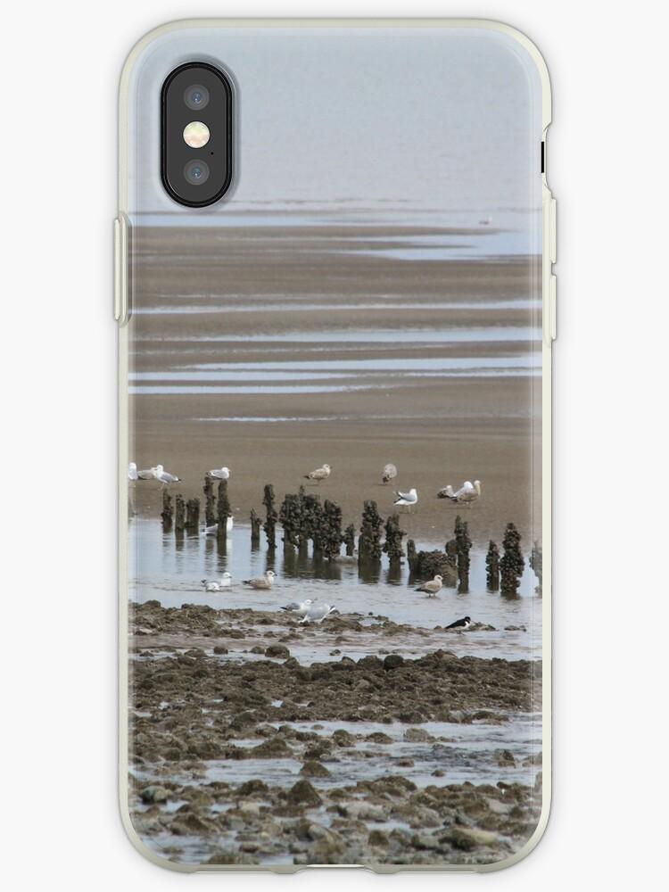 Gulls Galore by derbyshireduck