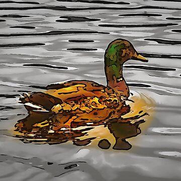 The golden duck by cmphotographs