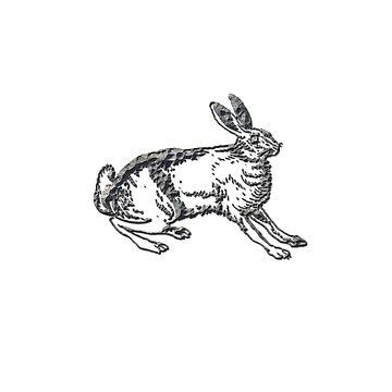 Rabbit chiseled by francodelgrando